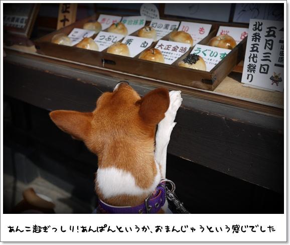 09デビュー戦.jpg