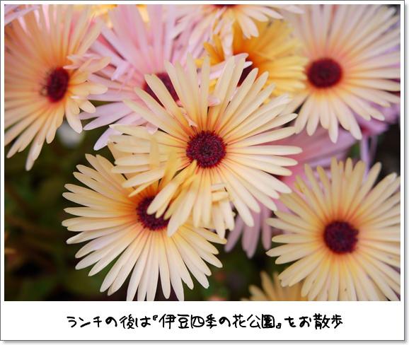 13デビュー戦.JPG
