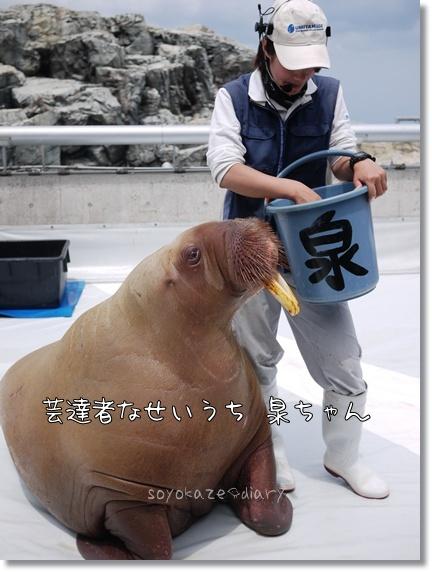 いずみちゃん.jpg