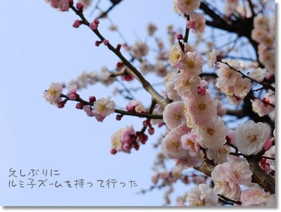 うめ~3.jpg