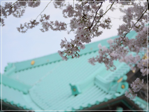 お寺とさくら.jpg