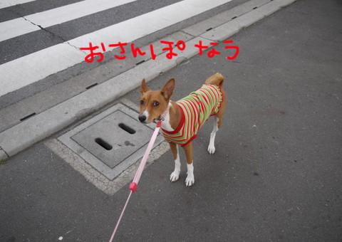 お散歩なう.jpg