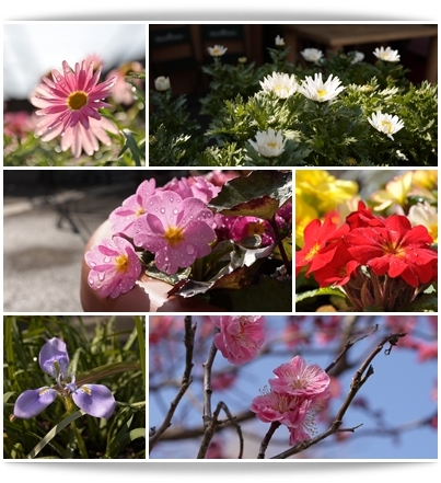 お花いっぱいのカフェ.jpg