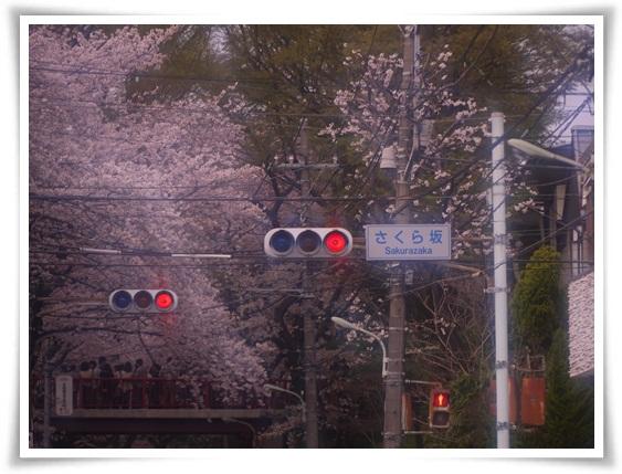 さくら坂.jpg