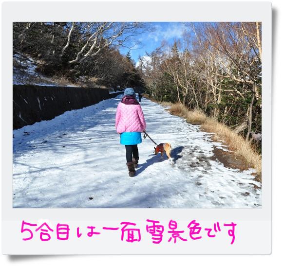 それにしても一面雪景色.jpg