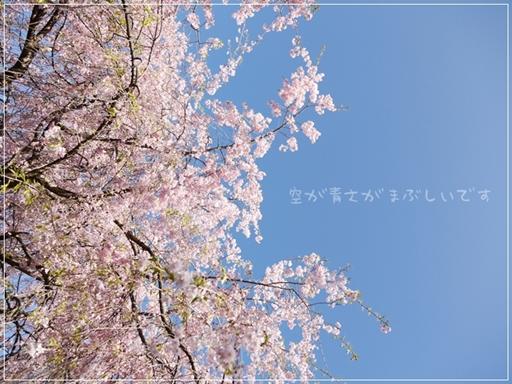 ぴんくがきれい.jpg