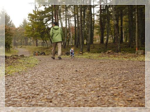 ウッドチップの散歩道.jpg