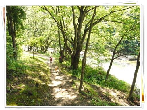 マイナスイオンの散歩道.jpg