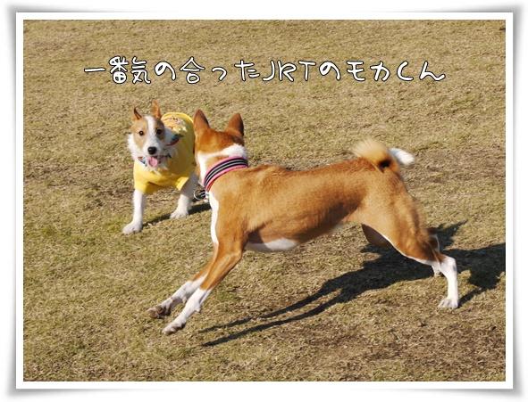 モカくん.jpg