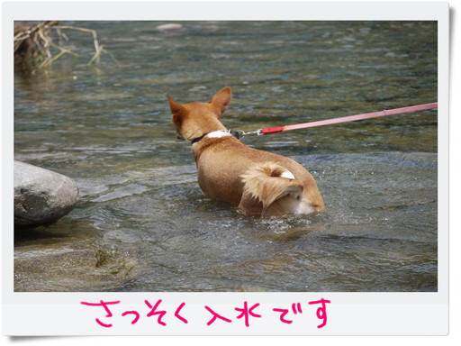 入水.jpg