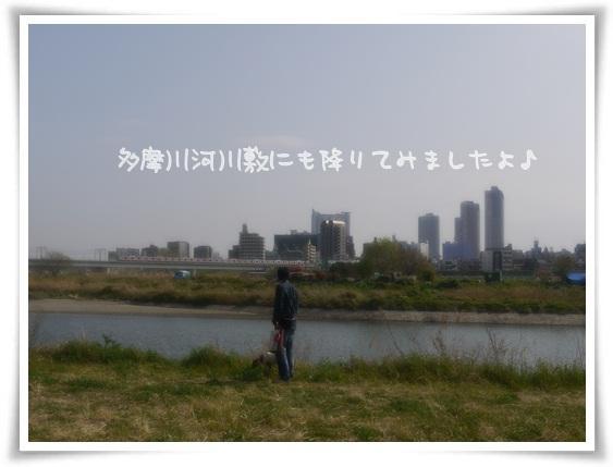 多摩川河川敷にも降りてみました.jpg