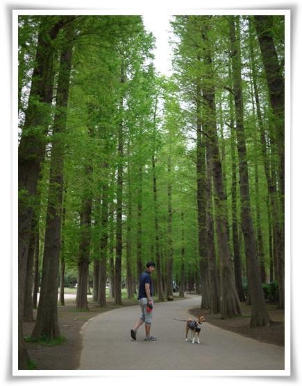 新緑散歩.jpg