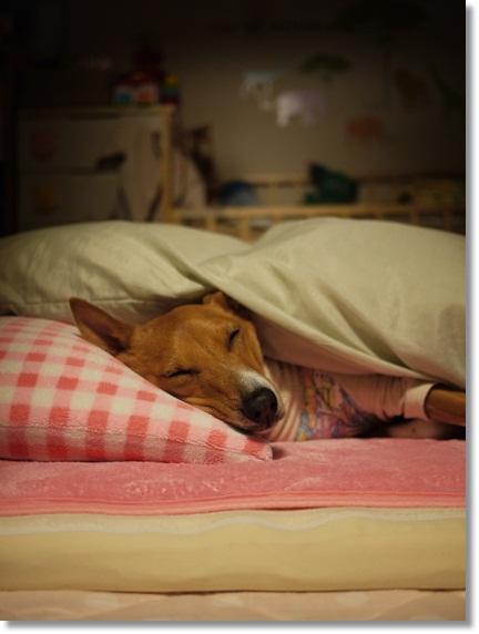 枕で寝る犬.jpg