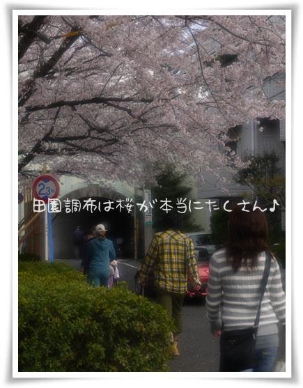 桜の田園調布をお散歩.jpg