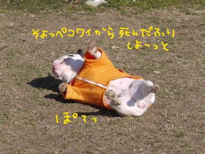 死んだふりフレブルちゃん.jpg