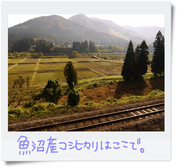 田んぼと只見線.jpg