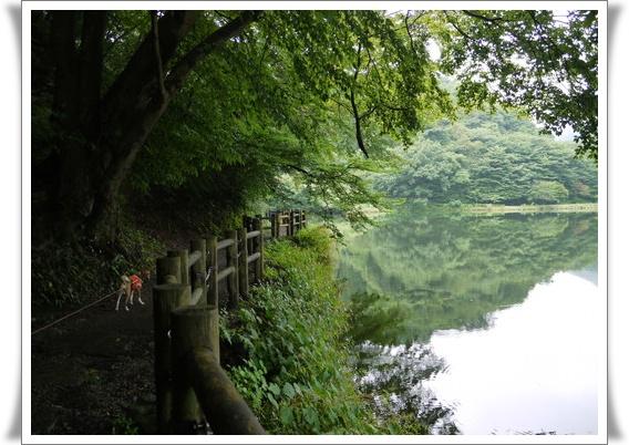 碓井湖のお散歩コース.jpg