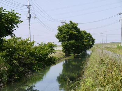 金野井用水路.jpg