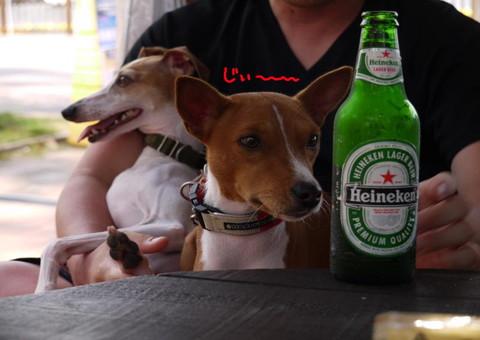 POPLINパパもビールを.jpg