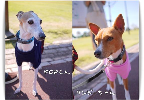 pop&LINDSAY.jpg