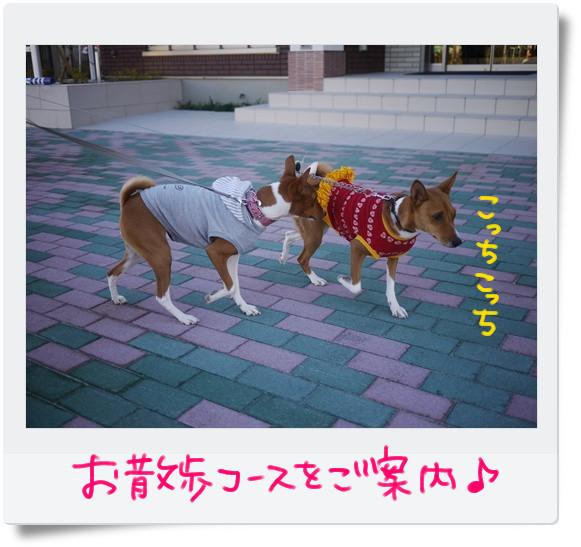 お散歩コース.jpg