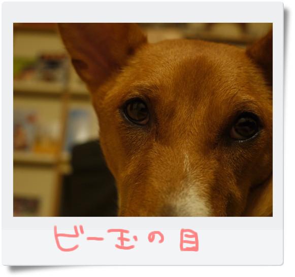 ビー玉の目.jpg