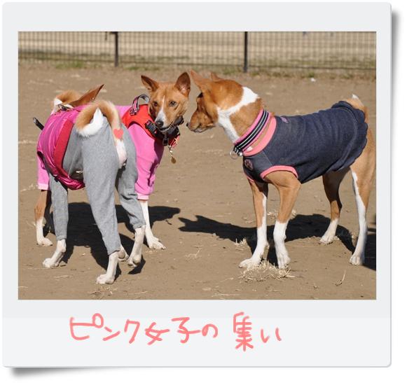 ピンク女子の集い.jpg