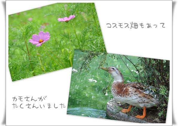 ローズマリー公園2.jpg