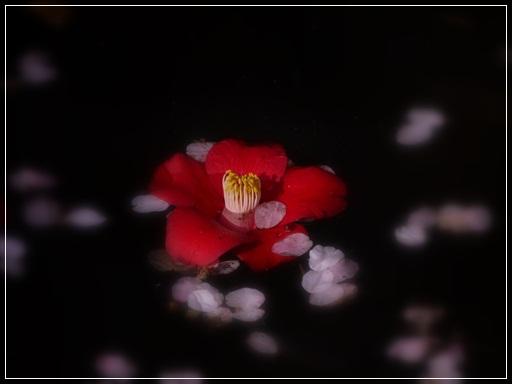 椿と花びら.jpg