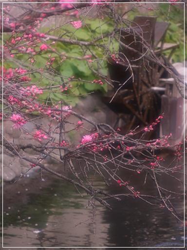 水車と桜.jpg