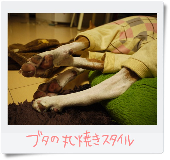 豚の丸焼きスタイル.jpg