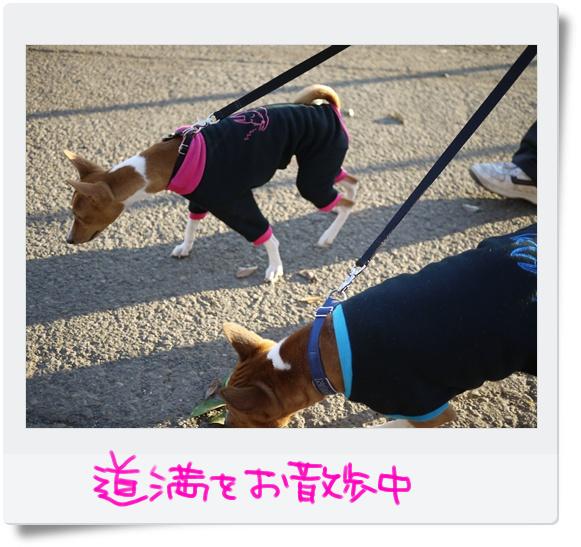 道満をお散歩.jpg