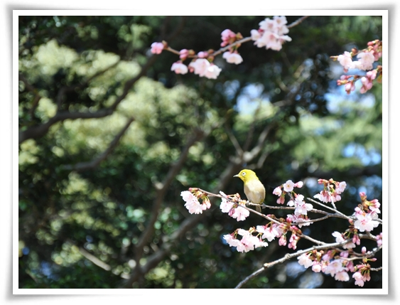 鳥さんと.jpg