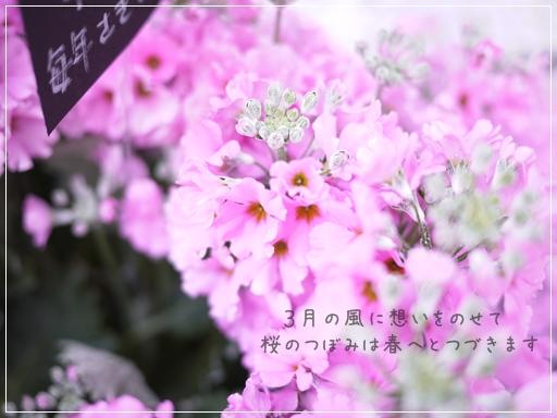 3月の風に.jpg
